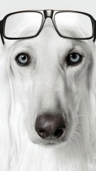 Dog wearing glasses Galaxy S5 Wallpaper