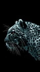 Leopard 01 Galaxy S5 Wallpaper