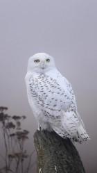 White wild birds Galaxy S5 Wallpaper