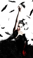 Black swan black feathers HD Wallpaper iPhone 6 plus