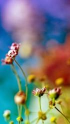 Colorful Nature iPhone 6 plus Wallpaper