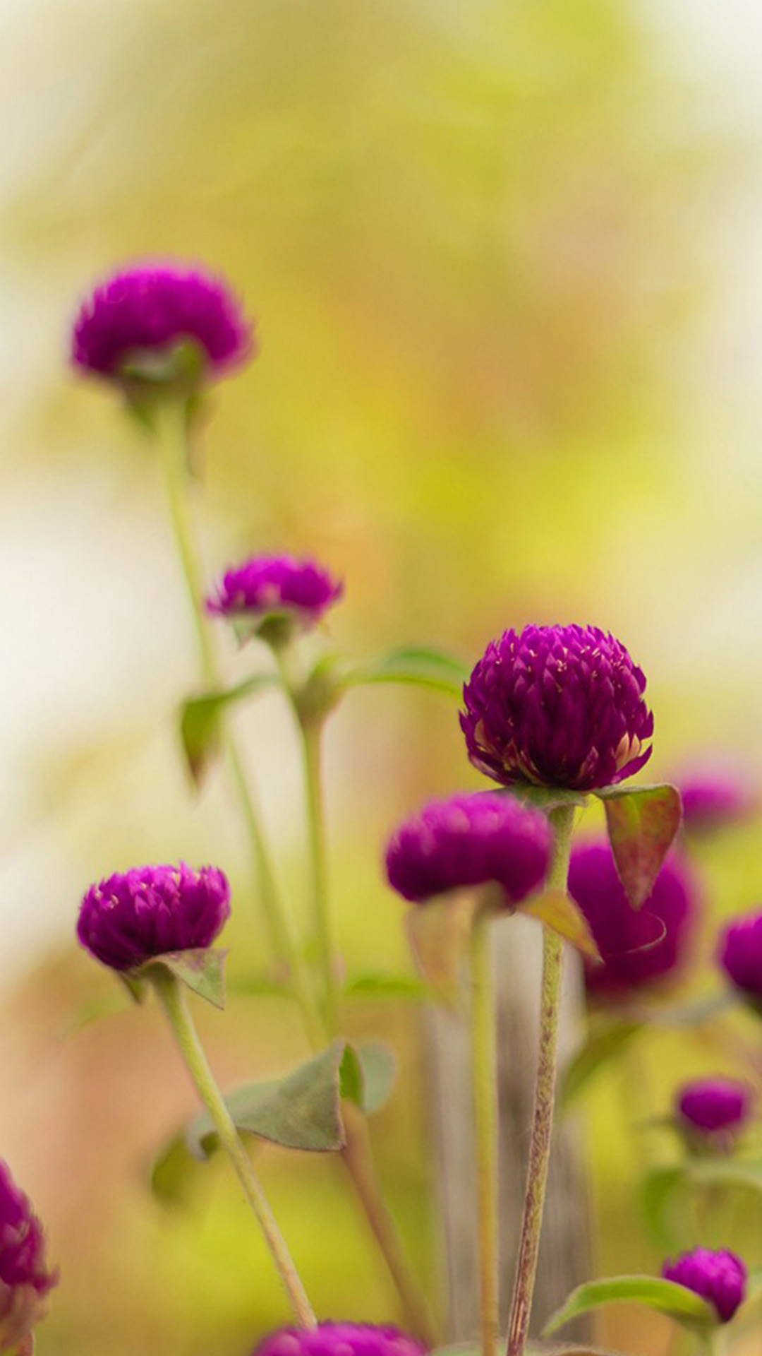 colorful purple flower hd wallpaper iphone 6 plus