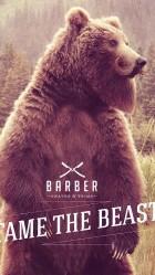 Funny Bear beard HD Wallpaper iPhone 6 plus