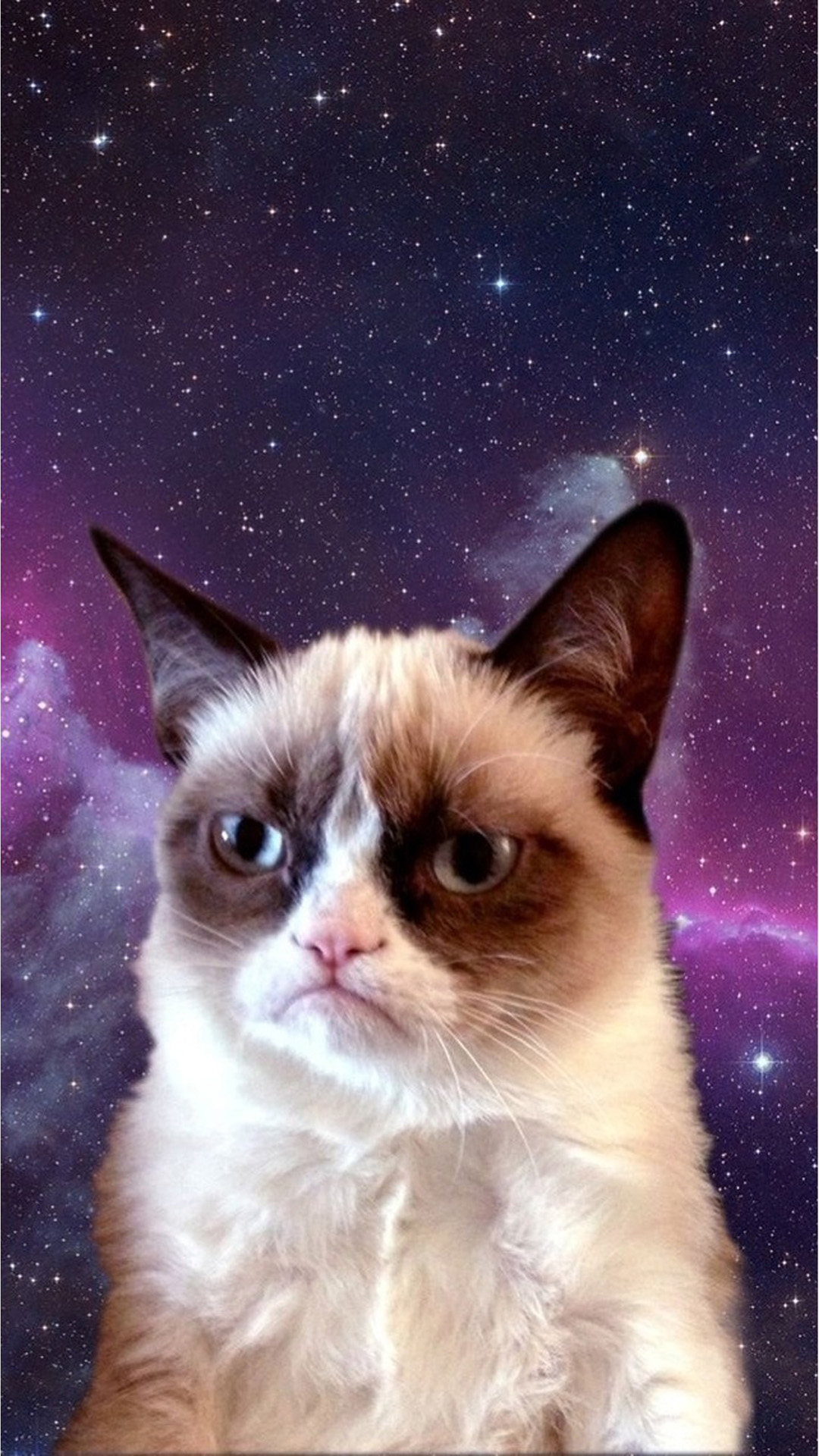 funny grumpy cat wallpapers images