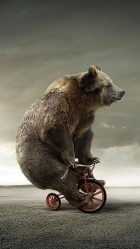 Funny Tricycle Bear HD Wallpaper iPhone 6 plus
