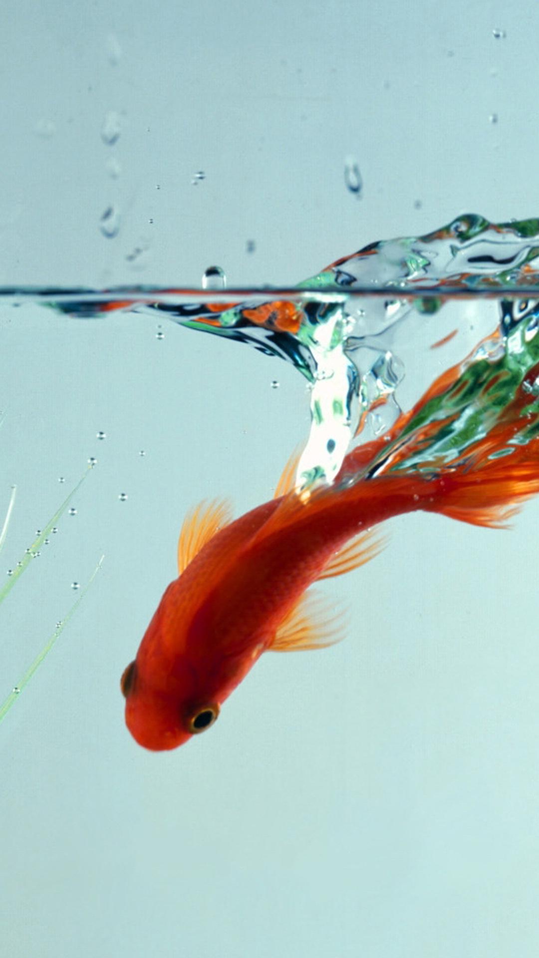 Wallpaper iphone fish - Iphone 6 Plus Fish Hd Wallpaper
