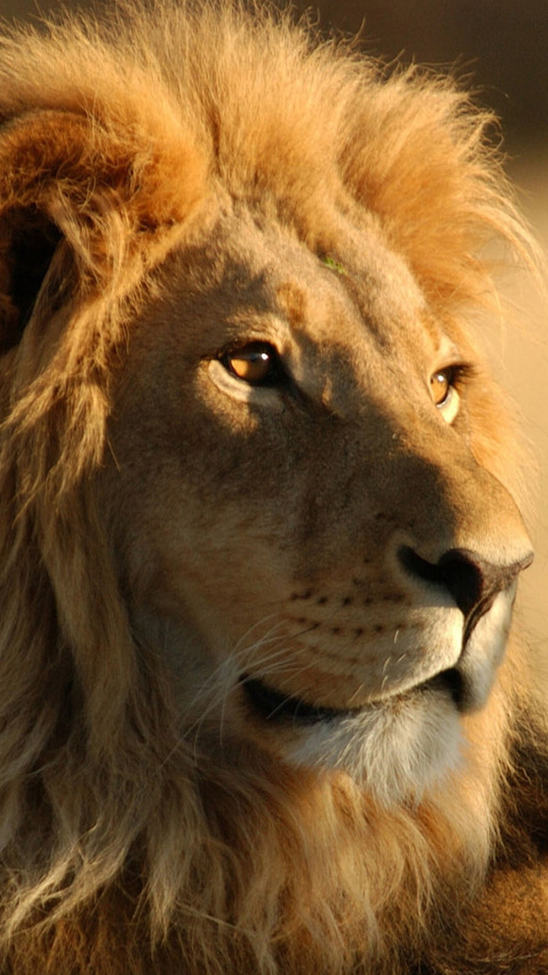 lion binary option download for pc